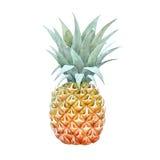 Watercolor pineapple fruit. Beautiful illustration with hand drawn watercolor pineapple fruit stock illustration