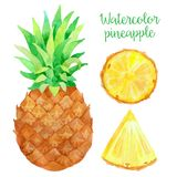 Watercolor pineapple Royalty Free Stock Images