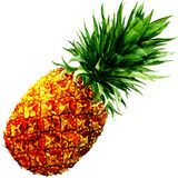 Watercolor pineapple isolated Royalty Free Stock Image