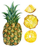 Watercolor pineapple set Stock Photos