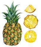 Watercolor pineapple set Stock Photos
