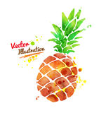 Watercolor pineapple Royalty Free Stock Photos