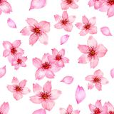 Watercolor pink cherry blossom sakura japan season flower isolated on white background for card wallpaper invitation. Hand paint royalty free illustration