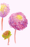 A watercolor pink dahlias  Royalty Free Stock Image