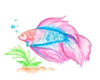 Watercolor pink fish Stock Photos