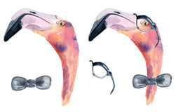 Watercolor pink flamingo with bow tie and glasses. Hand painted watercolor pink flamingo with bow tie and glasses Stock Photos