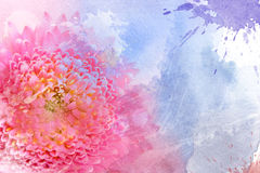 Watercolor pink flower Stock Photography