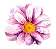 Watercolor pink flower without background. Watercolor picture, pink flower without background, processed by the program Stock Photography