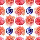 Watercolor Pink Flowers and Berries Seamless Pattern. Watercolor  flower and raspberry and blueberry seamless pattern isolated on white background Stock Photography
