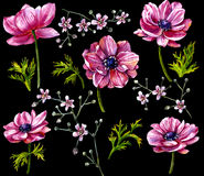 Watercolor Pink Flowers  on black. Stock Photo