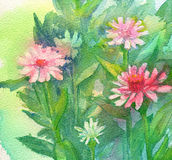 Watercolor Pink Flowers Royalty Free Stock Photo