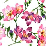 Watercolor pink freesia flower. Floral botanical flower. Seamless background pattern. vector illustration