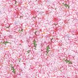 Watercolor pink hyacinth flower nature plant seamless pattern texture background.  Stock Photography