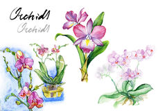 Watercolor pink orchid set royalty free illustration
