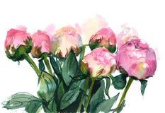 watercolor pink peonies Stock Photo