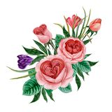 Branch of pink roses isolated royalty free illustration