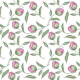 Watercolor pink peony seamless pattern royalty free illustration