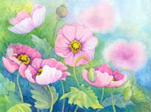 Watercolor of pink poppies on flowerbed. Watercolor of pink poppies on green flowerbed Stock Photography