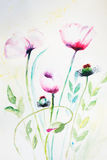 Watercolor pink poppy flowers. Watercolor original pink poppy flowers Royalty Free Stock Images