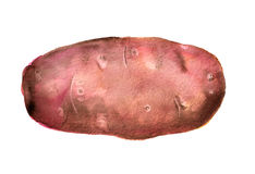 Watercolor pink  potato Stock Images