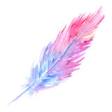 Watercolor pink purple blue bird rustic feather isolated.  Royalty Free Stock Photo
