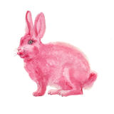 Watercolor pink rabbit Stock Photography