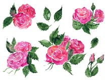 Watercolor pink red rose flower green leaf plant hand drawn clip art set isolated.  vector illustration