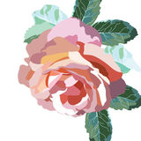 Watercolor Pink Rose flowers isolated Royalty Free Stock Photography