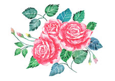 Watercolor pink roses bouquet art.Hand painted flowers with colorful leaves isolate.Illustration of valentine Stock Photo