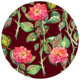 Watercolor pink roses circle pattern texture background Stock Images
