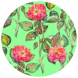 Watercolor pink roses circle pattern texture background Stock Photo
