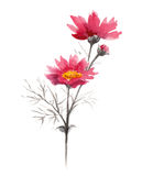 Watercolor pink summer flowers. Branch of pink summer flowers. Watercolor floral illustration Stock Photography