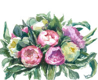 Watercolor pink and white peonies Stock Image