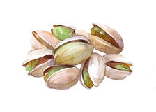 Watercolor Pistachio food nut isolated. On a white background illustration Stock Image