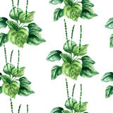 Watercolor plantain herbs. seamless pattern. Hand drawn watercolor botanical illustration of the plantain plant. Plantain drawing isolated on the white Royalty Free Stock Photo