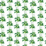 Watercolor plantain herbs. seamless pattern. Hand drawn watercolor botanical illustration of the plantain plant. Plantain drawing  on the white background Stock Image