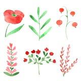Watercolor plants Stock Image