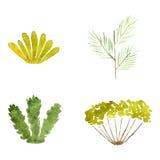 Watercolor plants Stock Photo