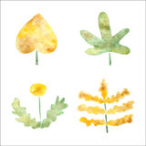 Watercolor plants Stock Images