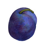 Watercolor Plum on White Background Royalty Free Stock Image