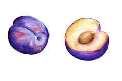 Watercolor plums Stock Images