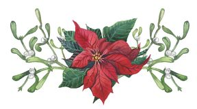 Watercolor poinsettia with Christmas floral decor. Hand painted traditional flower and plants: holly, mistletoe, berries and fir stock illustration