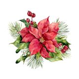 Watercolor poinsettia with Christmas floral decor. Hand painted traditional flower and plants: holly, mistletoe, berries. And fir branch isolated on white stock illustration