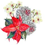 Watercolor poinsettia with orchid and peony color pencil   . Watercolor  poinsettia  orchid  peony color pencil bouquet Stock Image