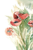 Watercolor -Poppies- Stock Photo