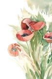 Watercolor -Poppies- Stock Photo