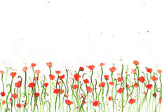 Watercolor poppies. Royalty Free Stock Image