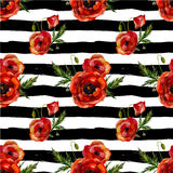 Watercolor poppies seamless pattern. Stock Image