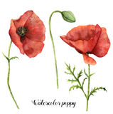 Watercolor poppies set. Hand painted floral illustration with leaves, seed capsule and branches isolated on white. Background. For design, print and fabric royalty free illustration
