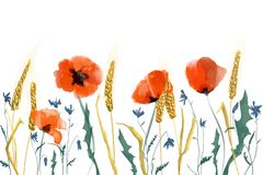 Watercolor poppies and wheat illustration. On a white background Stock Illustration